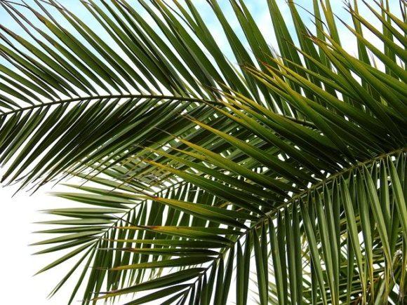 西日本模型前の棕櫚、頑張れ!