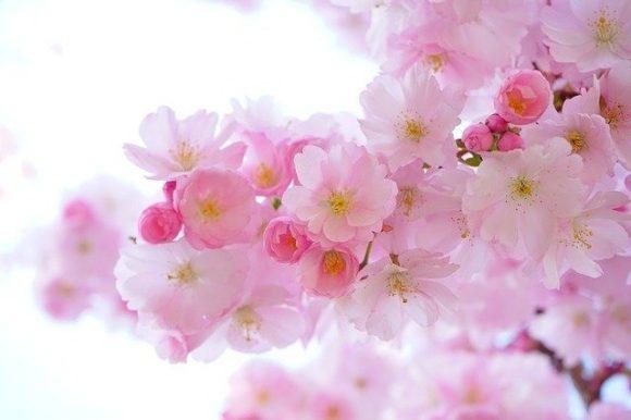 一足先に春がきました。