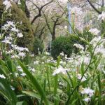 本庄公園の春